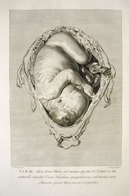 baby-womb-sketch-univ.liverpool